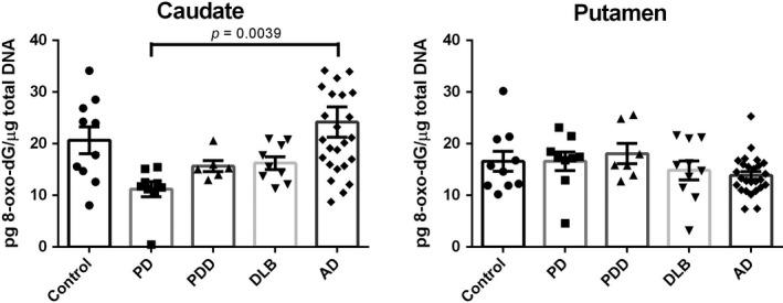 8‐oxo‐dG levels in the caudate and putamen from patients with diseases [Parkinson disease (PD): n = 10, Parkinson disease dementia (PDD): n = 7, dementia with Lewy bodies (DLB): n = 10, Alzheimer's disease (AD): n = 26] and age‐matched controls ( n = 10). Value shown are means ± SEM as the concentration of 8‐oxo‐7,8‐dihydro‐2'‐deoxyguanosine (8‐oxo‐dG) (pg) per total DNA (µg). A p value of