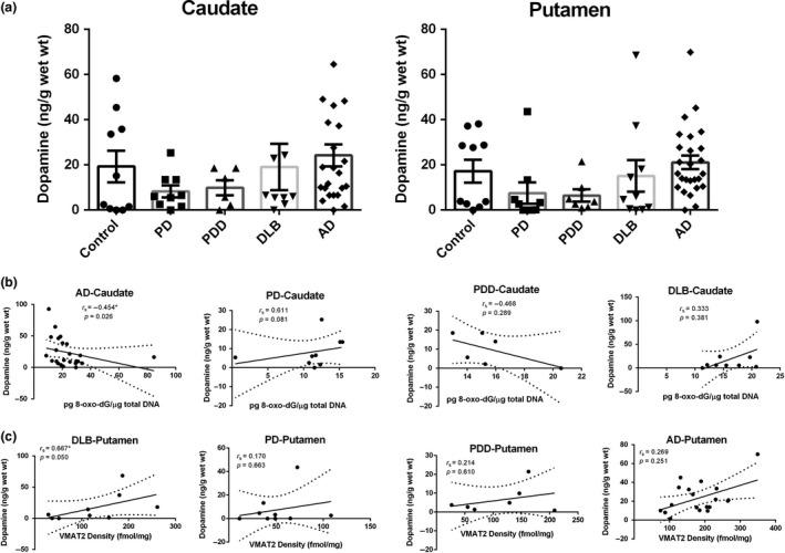 (a) Concentration of dopamine in the caudate and putamen from patients with diseases [Parkinson disease (PD): n = 10, Parkinson disease dementia (PDD): n = 7, dementia with Lewy bodies (DLB): n = 10, Alzheimer's disease (AD): n = 26] and age‐matched controls ( n = 10). Value shown are means ± SEM. (b) Concentration of dopamine vs level of 8‐oxo‐7,8‐dihydro‐2'‐deoxyguanosine (8‐oxo‐dG) in the caudate from diseases brains, significantly association was observed only in AD group ( p = 0.026). (c) Concentration of dopamine vs vesicular monoamine transporter 2 (VMAT2) expression in the putamen from diseases brains, significantly association was observed only in DLB group ( p = 0.050). r s , the Spearman's rank correlation coefficient.