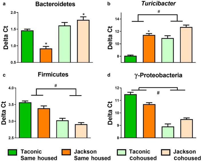 Effect of vendor and housing on bacterial taxa in fecal DNA from female mice. Shown are the abundances of (a) Firmicutes, (b) γ‐Proteobacteria, and (c) Turicibacter measured by qPCR of fecal DNA and normalized using pan‐bacterial primers. Fecal pellets were collected immediately before exposure to air or ozone. Data are mean ± SE . n = 9–22/group. * p