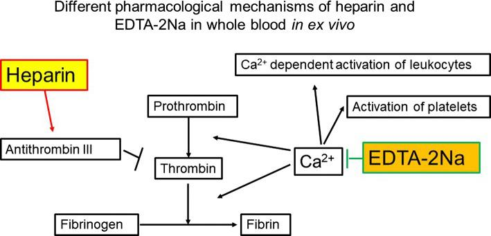 Different pharmacological mechanisms of heparin and ethylene-diamine-tetraacetic acid (EDTA)-2Na in whole blood ex vivo . Pharmacological mechanisms of heparin and EDTA-2Na in whole blood ex vivo are demonstrated in this schematic. Heparin binds to the enzyme inhibitor antithrombin (AT) III and greatly accelerates the rate at which AT III inactivates the coagulation enzymes thrombin and factor Xa. In contrast, EDTA-2Na scavenges metal ions (Ca 2+ and Mg 2+ ), thereby inhibiting activation of platelets and Ca 2+ dependent activation of leukocytes. The heparinized blood tube maintained leukocyte and platelet function ex vivo , just as it did in vivo