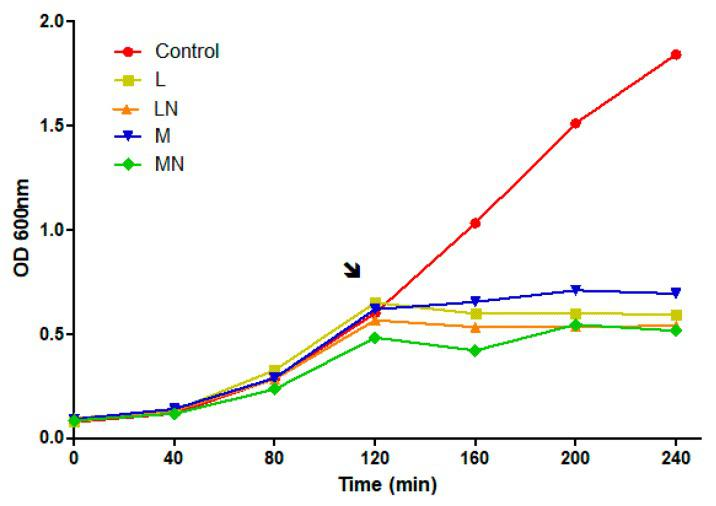 Escherichia coli growth curve in the presence of chitosan polymers and nanoparticles. The DH5α strain was grown in <t>Luria–Bertani</t> medium at 37 °C and 180 rpm. The black arrow indicates the addition of medium (M), and low molecular (L) polymers or MN LN nanoparticles in order to reach final concentration of 3 × minimum inhibitory concentration (MIC) values, of 1.41, 0.9, 1.2 and 0.9 mg/mL, of CS polymers/nanoparticles respectively.
