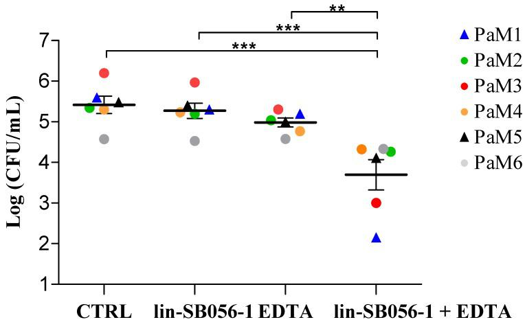 Antibacterial activity of peptide lin-SB056-1, ethylenediaminetetraacetic acid (EDTA), and both in combination against endogenous P. aeruginosa in primary ciliary dyskinesia (PCD) sputum. The effect of lin-SB056-1 and/or EDTA after 1.5 h of incubation in six diluted (1:5) sputum samples was assessed against endogenous P. aeruginosa strains (PaM1 to PaM6) by colony forming unit (CFU) counting. Lin-SB056-1 was tested at 25 μg/mL in combination with 0.625 mM EDTA against PaM1 and PaM5 strains (triangles), and with 1.25 mM EDTA against PaM2, PaM3, PaM4, and PaM6 strains (dots). Control (CTRL): bacteria incubated in diluted sputum only. Individual sputum samples are identified with different colors. Results represent the mean of 6 sputa done in duplicate. Error bars indicate the standard error of the mean. ** p
