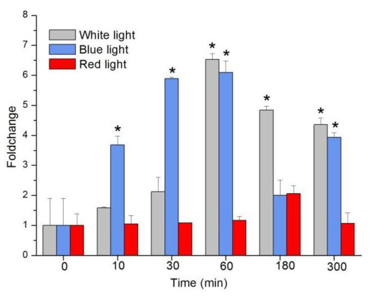Transcription changes of sjCRY-DASH induced by white light, blue light, and red light. Transcription accumulation was quantified by qRT-PCR. The changes in transcript levels after exposure to different light conditions are presented as fold changes relative to the RNA from dark-grown sporophytes. Each test was performed in six biological samples. The data in the figures represent the averages ± standard deviation. Data were analyzed by two-way ANOVA followed by Turkey's multiple comparison test. * p
