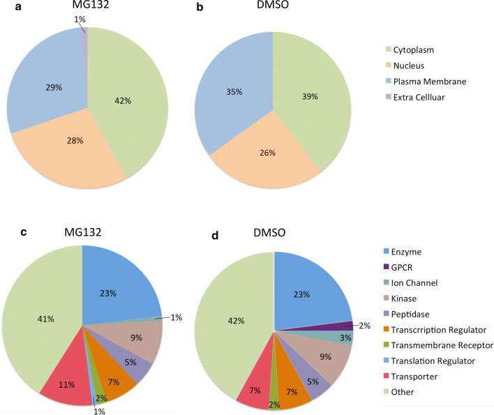 Overview of ubiquitinated proteins identified in SKOV3 ovarian cancer cells with MG132 and DMSO control treatment. a Cellular distribution of ubiquitinated proteins identified in MG132 treated SKOV3 cells. b Cellular distribution of ubiquitinated peptides observed in DMSO control treated SKOV3 cells. c Functional classification of ubiquitinated proteins detected in MG132 treated SKOV3 cells. d Functional classification of ubiquitinated proteins detected in DMSO control treated SKOV3 cells
