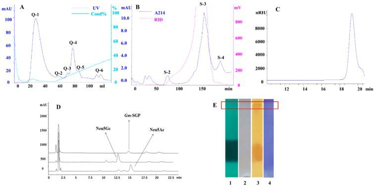 Chromatography isolation, purification and characterization of Gm -SGPP. ( A ) Anion-exchange chromatography of crude sample on Q Sepharose Fast Flow column (QFF) (3 × 5 mL). Flow rate, 1 mL/min; fraction size, 4 mL. ( B ) Gel filtration of fraction Q-4 on Sephacryl S-300 column (1.6 × 100 cm). Flow rate, 1 mL/min; fraction size, 4 mL. ( C ) High-performance size exclusion chromatography (HPSEC) profiles of Gm -SGPP using a TSK-GEL G4000PWXL column (30 cm × 7.8 mm). Flowing phase, 0.2 M NaCl; flow rate, 0.5 mL/min; column temperature, 40 °C ( D ) High-performance liquid chromatograph (HPLC) of sialic acid using a ZORBAX SB-C18 column (4.6 mm × 150 mm). Flowing phase, 5% acetonitrile–ultrapure water; flow rate, 1 mL/min; column temperature, 35 °C ( E ) Sodium dodecyl sulfate-polyacrylamide gel electrophoresis (SDS-PAGE)of Gm -SGPP. 1, green for phosphorus staining; 2, Sudan black B for lipid staining; 3, periodic acid/Schiff for carbohydrate staining; 4, Coomassie Brilliant Blue for protein staining.