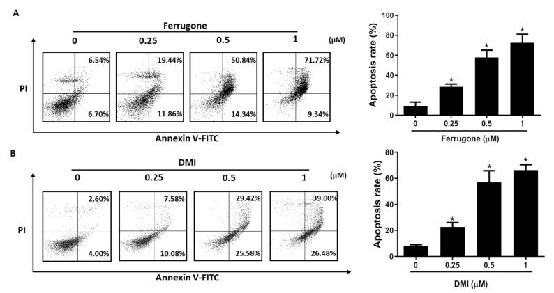 Effect of ferrugone and DMI on apoptotic cell death in human ovarian cancer cells. A2780 cells were treated with ferrugone ( A ) and DMI ( B ) (0.25, 0.5, and 1 µM) for 48 h and co-stained with PI and Annexin V-FITC (fluorescein isothiocyanate). The translocation of phosphatidyl serine was detected by flow cytometry. The graph indicates the percentages of annexin V-positive apoptotic cells in the right quadrants of flow cytometry graphs. The data are representative of three independent experiments. Data were analyzed using one-way ANOVA followed by Dunnett's multiple comparison test. * p