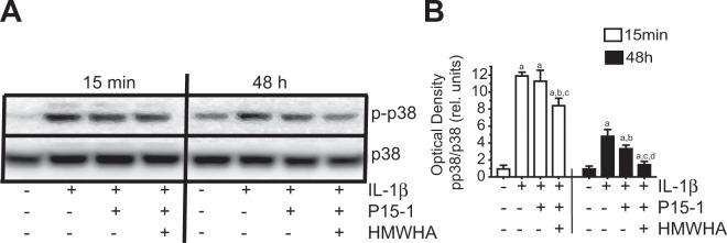 ( A) Immunoblot analysis of cell extracts from human articular chondrocytes treated with IL-1β, IL-1β and P15-1, or IL-1β, P15-1 and HMWHA for 15 min or 48 h with antibodies specific for phosphorylated (activated) form of p38 (p-p38) or total p38 (p38). ( B) The optical densities of the p-p38 and p38 bands were quantitated by densitometry. Results are expressed as optical density of p-p38 band divided by the optical density of the p38 band and relative units to the value of vehicle-treated cells at 15 min or 48 h, which was set as 1. The blot in ( A) is representative of 3 separate experiments with similar results. The optical densities were analyzed on three immunoblots and values are mean ± SD.