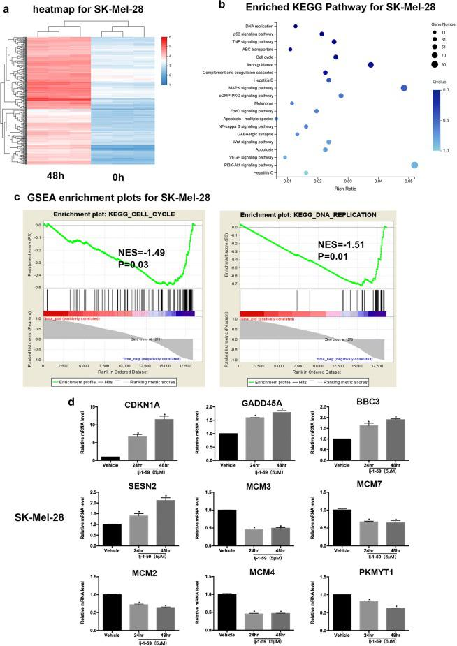 """RNA-seq analyses of the effect of lj-1-59 on the gene expression profile. a The heatmap of SK-Mel-28 after lj-1-59 treatment. b Top 20 enriched KEGG pathways after lj-1-59 treated. c GSEA enrichment plots after lj-1-59 treated, and Normalized enrichment score (NES) and Normalized p -value (P) are shown in each plot. d SK-Mel-28 cells were treated with 5 µM lj-1-59 for 48 h. Then extract total RNA to Q-RT-PCR analysis as described in """" Methods """". The results are expressed as the mean (n = 6) ± SD. Significant differences were evaluated using Student's t-test, and an asterisk (*) indicates a significant difference ( p"""