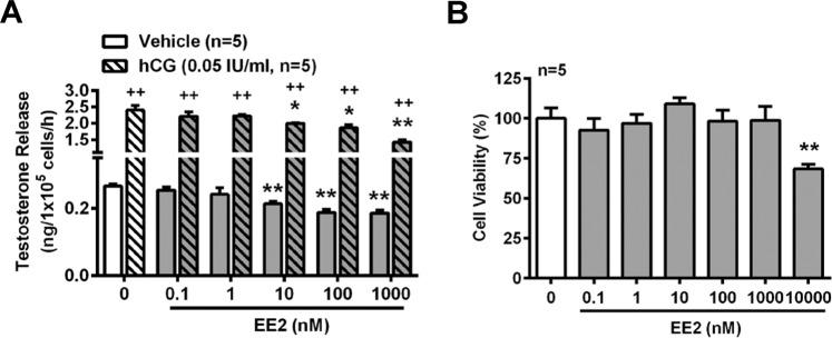 EE2 treatment reduces testosterone release in normal rat primary Leydig cells. EE2 inhibits testosterone release in vitro . ( A ) RIA for analyzing the concentration of testosterone in normal rat primary Leydig cells. Cells (1 × 10 5 cells per tube) were treated with EE2 (0.1–1000 nM) in the absence or presence of hCG (0.05 IU/ml) for 1 h. At the end of the incubation, culture media were collected for testosterone RIA. ( B ) Cell survival assay. Rat primary Leydig cells (1 × 10 5 cells per well) were seeded in a 96-well microplate and rested for 12 h. Subsequently, cells were treated with EE2 at different concentrations (0.1–10,000 nM) for 1 h. Then, the survival rate was measured by the MTT assay. Data represent means ± SEM (n = 5). * P