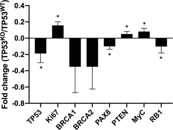 Fold change of relative mRNA expression of TP53 , Ki67 , BRCA1/2 , PAX8 , PTEN , My c and RB1 in TP53 KO vs . TP53 WT oviduct-on-a-chip platforms. * indicates statistically significant changes (paired samples t-test, p