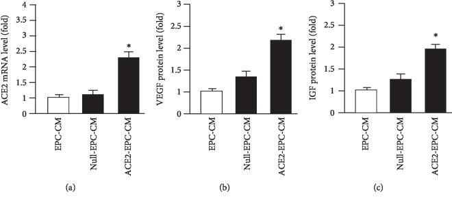 ACE2 transfection increased the mRNA level of ACE2 and the protein levels of VEGF and IGF. (a) qRT-PCR analysis of the ACE2 mRNA level in the three types of CM. (b, c) ELISA analysis of VEGF and IGF protein levels in the three types of CM. ∗ P