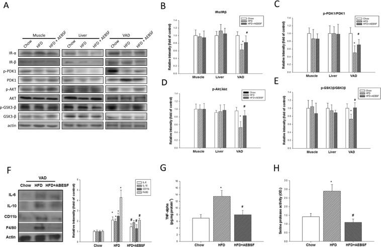4-(2-Aminoethyl) benzenesulfonyl fluoride hydrochloride (AEBSF) recovered high-fat diet (HFD)-impaired insulin signaling and inflammation in visceral adipose (VAD) tissue of LDLR −/− mice. ( A ) The peripheral-tissue insulin signaling pathway [insulin receptor, pyruvate dehydrogenase kinase isozyme 1 (PDK1), Akt, glycogen synthase kinase 3β (GSK3β)] was analyzed by western immunoblots. ( B ) Quantification of insulin receptor-α and -β expression, measured by imageQuant. Amounts of phosphorylated and total PDK1 ( C ), Akt ( D ), and GSK3β ( E ). ( F ) VAD tissue inflammatory cytokines and macrophage markers [interleukin (IL)-6, <t>IL-10,</t> CD11b, F4/80] were analyzed by western immunoblots, with protein levels quantified by imageQuant. ( G ) Tumor necrosis factor-α (TNF-α) expression in VAD tissue was analyzed by ELISA. ( H ) Serine protease activity in VAD tissue of mice receiving the chow, HFD, and HFD + AEBSF treatments ( n = 6/group). * P