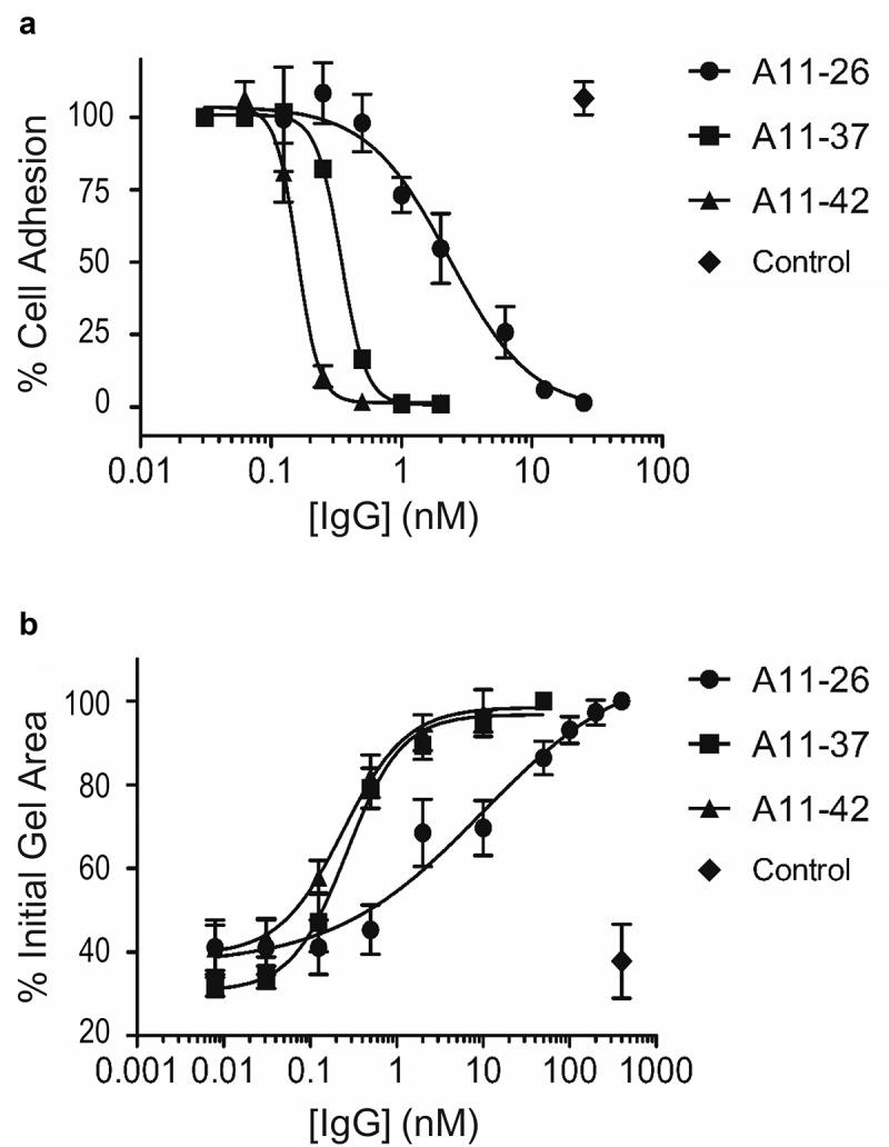 Effects of immunoglobulins on integrin-α11/β1 function in cells . (a) Dose response curves for the effects of anti-integrin-α11/β1 IgGs and a negative control IgG (x-axis) on adhesion of C2C12-α11/β1 cells to collagen-I (y-axis). Assays were performed in DPBS containing 10 mM CaCl 2 and 5 mM MgCl 2 (b) Dose response curves for the effects of anti-integrin-α11/β1 IgGs and a negative control IgG (x-axis) on collagen-I gel contraction with C2C12-α11/β1cells. Assays were performed in serum-free DMEM. The means of at least three independent experiments are plotted and bars denote the standard deviation.