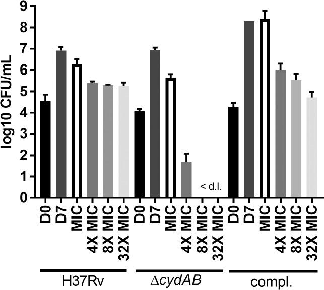 11626252 is bacteriostatic but bactericidal in the absence of the bd oxidase. H37Rv, ΔcydAB and the complemented strain were exposed to increasing concentrations (1X MIC-32X MIC) of 11626252 for 7 days. Bacteria were plated on 7H10-OADC on day 0 (D0) to determine the initial number of CFU. After 7 days of exposure, untreated bacteria (D7) were plated for CFU enumeration. Results are expressed as the mean log 10 CFU/mL ± s.d.of two independent experiments.