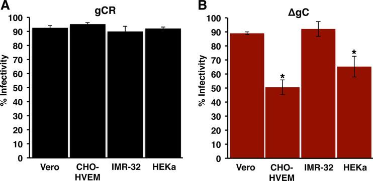 HSV-1 lacking gC exhibits reduced entry and infectivity in a subset of cell types. Equivalent inocula of HSV-1 gCR (A) or ΔgC (B) were bound to Vero, CHO-HVEM, IMR-32, or HEKa cells for 1 h at 4 0 C. Following a shift to 37°C for 6 h, infected cells (MOI of ∼0.9) were quantitated by immunofluorescence. Infectivity is reported as percent HSV antigen-positive cells of ∼500 total cells. Data represent means of results from three independent experiments each performed in triplicate, with standard deviations. *, P