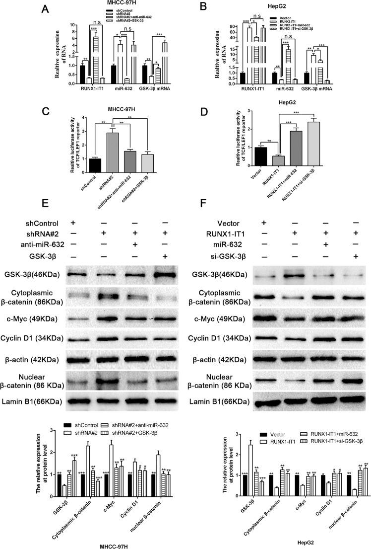 RUNX1-IT1 suppresses Wnt/β-catenin pathway through RUNX1-IT1/miR-632/ GSK-3β cascades. Rescue experiments revealed that RUNX1-IT1 negatively regulated the miR-632 expression a , b , whereas positively regulated both the mRNA a , b and protein e , f expression of GSK-3β by RUNX1-IT1/miR-632/GSK-3β cascades. n = three independent experiments. * P
