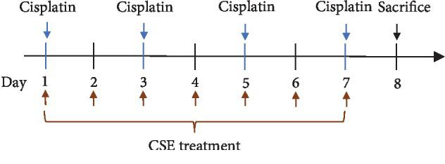 Study scheme of cisplatin and CSE treatment. Mice were divided into 3 groups: (i) control group: 10 mL/kg/day of 5% Dextrose by i.p. injection on days 1, 3, 5, and 7; distilled water (10 mL/kg/day) by oral gavage on days 1-7. (ii) Cisplatin group: cisplatin (5 mg/kg/day) by i.p. injection on days 1, 3, 5, and 7; distilled water (10 mL/kg/day) by oral gavage on days 1-7. (iii) CSE groups: cisplatin (5 mg/kg/day) by i.p. injection on days 1, 3, 5, and 7; CSE (9.6 mL/kg/day) by oral gavage on days 1-7.