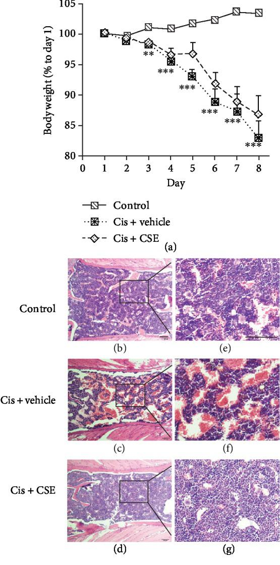Effect of CSE on mice receiving cisplatin. (a) Body weight changes after cisplatin treatment. Mice were administered with CSE (9.6 mL/kg/day) or distilled water (CIS+vehicle) by gavage for 7 days in the i.p. injection of cisplatin (5 mg/kg/day) on days 1, 3, 5, and 7. Data are represented as mean ± SEM ( n = 8 per group). The significance of the data was analyzed by one-way ANOVA with post hoc Dunnett's test. ∗∗ P