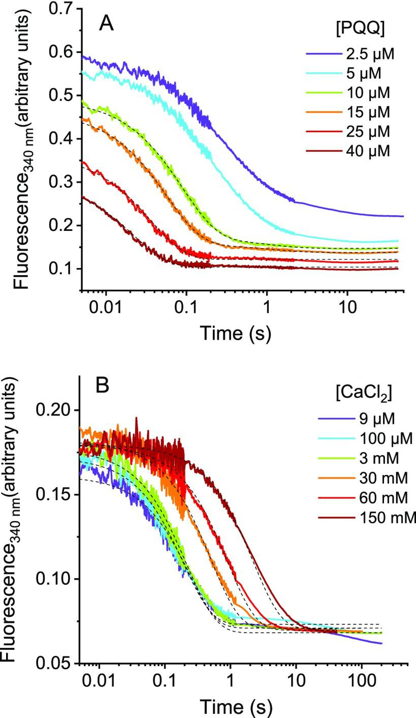 Transient traces of the quenching of tryptophan fluorescence residues of apo-sGDH during enzyme reconstitution with PQQ and calcium. (A) Stopped-flow kinetics obtained after mixing 2.5 μM subunits of apo-sGDH with 3 mM CaCl 2 and different concentrations of PQQ (from left to right): 40, 25, 15, 10, 5, and 2.5 μM. All concentrations given are after mixing. The reactions were carried out at 10 °C in a 50 mM Tris buffer (pH 7.5), and the fluorescence was monitored at 340 nm with an excitation at 297 nm. (B) Stopped-flow kinetics obtained after mixing 2.5 μM subunits of apo-sGDH with 5 μM PQQ and different concentrations of CaCl 2 (from left to right): 9 μM, 100 μM, 3 mM, 30 mM, 60 mM, and 150 mM. All concentrations given are after mixing, and other experimental conditions are the same as in (A). The black dotted curves in (A) and (B) are the best fits of a monoexponential function to the experimental data.
