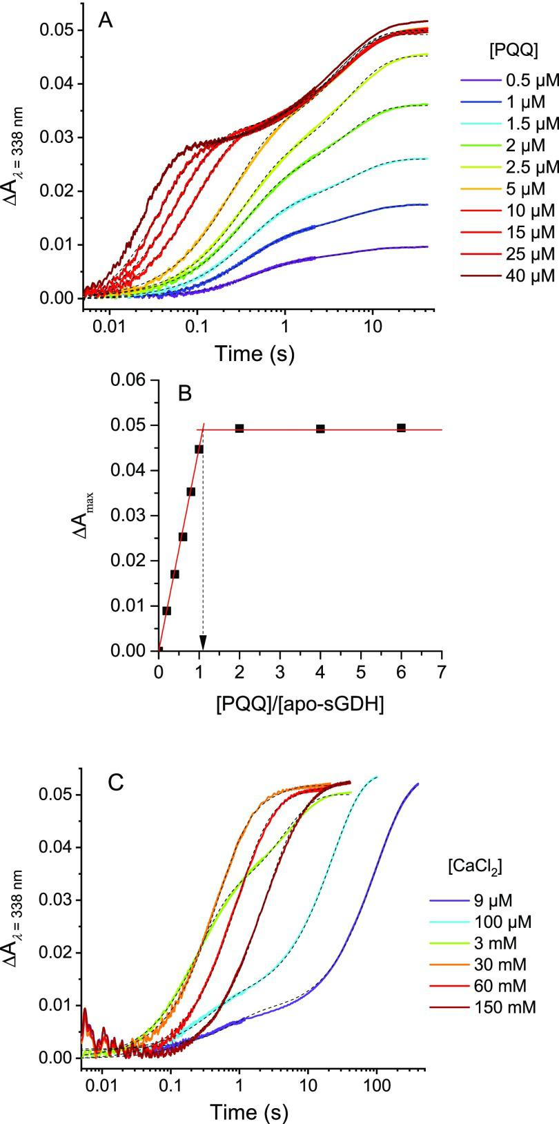 Stopped-flow transient traces of the catalytic reduction of PQQ by glucose during the reconstitution/activation of apo-sGDH into holo-sGDH. (A) Kinetic traces (average of four consecutive experiments) obtained after mixing 2.5 μM subunits of apo-sGDH with 100 μM glucose, 3 mM CaCl 2 , and different concentrations of PQQ (from left to right): 40, 25, 15, 10, 5, 2.5, 2, 1.5, 1, and 0.5 μM (the code color for each [PQQ] is reported on the graph). All concentrations given are after mixing. The reactions were monitored at 338 nm and 10 °C in a 50 mM Tris buffer (pH 7.5). (B) Titration plot of apo-GDH by PQQ obtained from the plot of total absorbance change in (A) as a function of the [PQQ]/[apo-sGDH] ratio. (C) Kinetic traces (average of four consecutive experiments) obtained after mixing 2.5 μM subunits of apo-sGDH with 5 μM PQQ (2-fold excess), 100 μM glucose, and different concentrations of CaCl 2 : 9 μM, 100 μM, 3 mM, 30 mM, 60 mM, and 150 mM (the code color for each [CaCl 2 ] is reported on the graph). All concentrations given are after mixing, and other experimental conditions are the same as in (A). The black dotted curves in (A) and (C) are the best fits of a biexponential law to the experimental data.