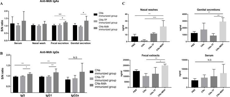 Antibody measurements at 2 weeks after primary intranasal immunization. (A) Specific IgA antibodies in sera, nasal wash, fecal extract, and genital secretions. Significant production of IgA was detected in the fecal excretions and genital secretions from the CNs-Mdh-immunized group compared to CNs-TF-immunized group. (B) Specific IgG antibodies at 2 wpi. The CNs-Mdh elicited a significantly higher titer of specific IgG than that of the CNs-TF-immunized group which served as the vector control. The main subtype produced after immunization was IgG1, while the titer of IgG2a was not significantly enhanced following immunization. (C) Total IgA antibodies in sera, nasal wash, fecal extract, and genital secretions. Titers of IgA in genital secretions and fecal excretions were significantly increased in CNs-Mdh-immunized group compared with those following the CNs-TF-immunization. In the nasal washes, a high titer of IgA in the CNs-Mdh-immunized group was measured, indicating significance compared to the PBS- and CNs-immunized groups. However, there were no significant differences in sera. Groups were statistically compared using one-way ANOVA with Tukey's post hoc multiple comparison test. The results for specific antibodies are expressed as the sample to negative control (PBS) ratio (S/N ratio).