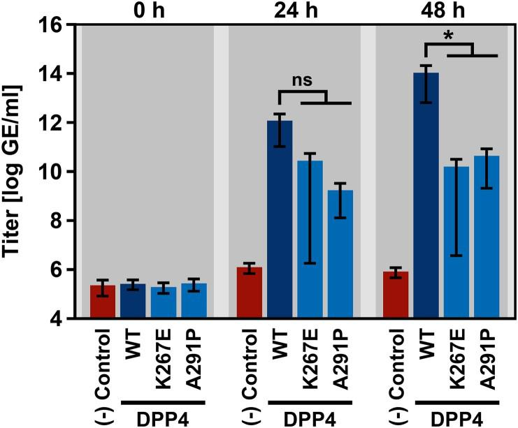 DPP4 harboring polymorphic amino acid residues at the binding interface with MERS-CoV S poorly support replication of live MERS-CoV. Two DPP4 mutants that showed reduced compatibility for MERS-CoV S-driven host cell entry (K267E and A291P) were analyzed in the context of infection and replication of authentic MERS-CoV. For this, BHK-21 cells expressing wildtype (WT) or mutant DPP4, or no DPP4 at all (negative control) were inoculated with MERS-CoV. At 1 h postinfection, the inoculum was removed and the cells were washed before they received fresh culture medium and were further incubated. MERS-CoV replication was analyzed at 0, 24 and 48 h postinfection by determining MERS-CoV genome equivalents (GE) in the culture supernatant (given as GE/ml) by quantitative reverse-transcriptase PCR. Shown are the combined results of three independent experiments (each performed in triplicates). Error bars indicate the SEM. Statistical significance of differences in MERS-CoV replication in cells expressing WT or mutant DPP4 was analyzed by two-way analysis of variance with Dunnett's posttest ( p > 0.05, ns; p ≤ 0.05, *).