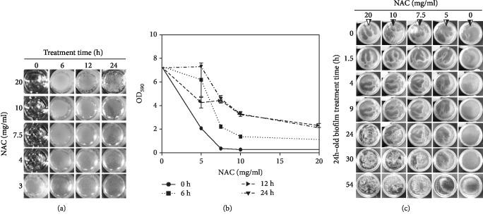 The effect of NAC on biofilm development and dismantling. (a) Microbiome taken from the chronic wounds and grown in 96-well <t>microtiter</t> plates. Concentrations of NAC ranging from 3 to 20 mg/ml were applied to the cultures at the times indicated (0, 6, 12, and 24 h). The pictures shown were taken at 48 h after initiation of the culture. When ≥4 mg/ml NAC were applied to the culture at 0 h, the biofilm never developed. When ≥10 mg/ml of NAC was applied at 6, 12, and 24 h after culture initiation, biofilm formation was visibly altered or became fragile and disrupted. (b) At 48 h, biofilm was stained with crystal violet (CV) and the absorbance at 590 nm was measured to quantify biofilm biomass. At 0 h, 5 mg/ml application, 5 mg/ml NAC significantly reduced the appearance of biofilm, and when applied at 6 and 12 h, it was able to decrease biofilm production but not when applied at 24 h. ≥10 mg/ml NAC or more significantly diminish biofilm formation. Three technical repeats with standard deviation as error bars for quantitative data. (c) The dose-dependent effect of NAC on 24 h old biofilm cultured in 35 mm petri dishes was recorded over time. 20 mg/ml of NAC dismantled biofilm by 24 h; 10 and 7.5 mg/ml of NAC were able to fully disrupt biofilm at 30 and 54 h, respectively. 5 mg/ml NAC did not cause changes in existing biofilm.