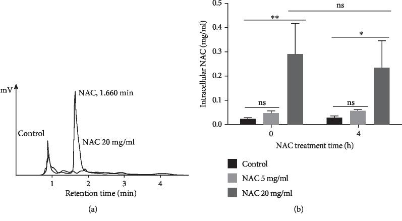 Detection of intracellular NAC using HPLC. 24 h-biofilm was treated with 20, 5 or 0 mg/ml NAC for 0 h or 4 h. After being collected and washed with PBS, cell pellets were sonicated to break the cell membrane and release intracellular NAC. The concentration of NAC was detected by an HPLC system equipped with a Phenomenex Luna C 18 column (150 × 4.6 mm; 5 μ m, 100 Å) and an UV/visible detector set at 214 nm. (a) Retention time for NAC was at 1.660 min. A standard curve was made with NAC concentrations ranging from 0 to 1 mg/ml, and from this curve, peak areas are used to determine the concentration of NAC in the experiment. (b) After 20 mg/ml NAC treatment for 0 and 4 h, the concentrations of intracellular NAC were significantly higher than both control and 5 mg/ml NAC. Biological duplicates from each treatment were used for the quantitative data.