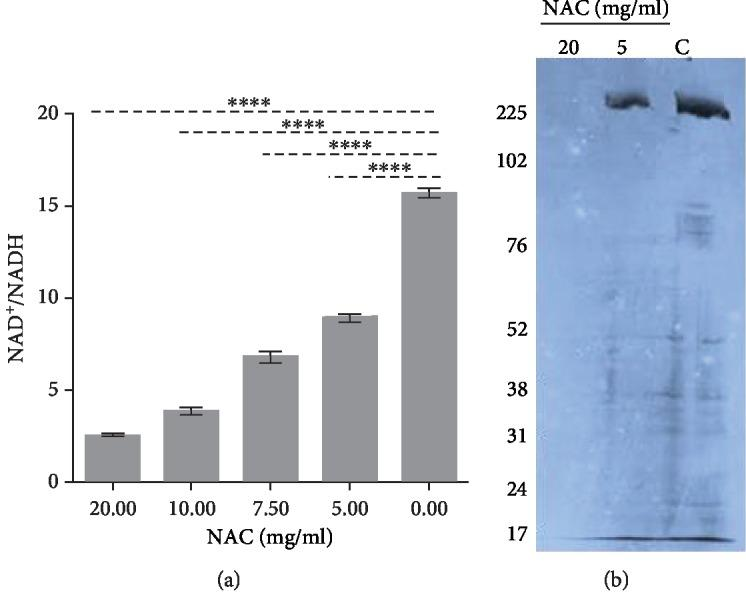 The effects of NAC on bacterial oxidative stress and protein synthesis. (a) NAD + /NADH ratio for the 24 h biofilm treated with NAC. The ratio decreases with the increase of NAC concentration indicating that NAC treatment causes an increase in oxidative stress in the cytosol of the bacteria. (b) 35 S labeling of proteins shows that NAC at 20 mg/ml inhibits protein synthesis whereas at 5 mg/ml does not.