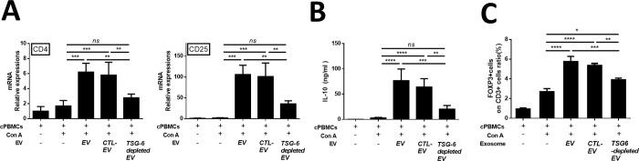 cASC-EV TSG-6 increased Treg proliferation in vitro . Con A-stimulated canine lymphocytes were cocultured for 48 h with cASC-EVs transfected with TSG-6 siRNA (si-TSG6) or scrambled siRNA (siCTL), or naïve EVs. (A) CD4 and CD25 mRNA-expression levels were measured, confirming that TSG-6 was associated with increased Treg production. (B) IL-10, which is known to be secreted from Tregs, was also measured in the supernatant medium, and the results confirmed that IL-10 production in lymphocytes was associated with TSG-6 (n = 6 in each group). (C) The Treg population was determined by measuring FOXP3 and CD3 double-positive cells by flow cytometry (n = 6 in each group). The results are presented as the mean ± standard deviation (*P