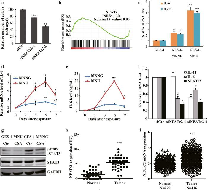 NFATc2 contributes to gastric carcinogenesis by affecting the inflammatory pathways. a Cell anchorage-independent growth in transformed cells with NFATC2 siRNA knockdown. b Gene set enrichment plots of differentially expressed genes belonging to the NFATc pathway in NOC-treated cells. P value is determined by GSEA software. c IL-6 and IL-11 mRNA expression in malignant transformed cells by RT-qPCR. d IL-6 expression by PCR after NOC treatment at different times. e IL-6 production detected by ELISA after NOC treatment at different times. f RT-qPCR analysis of IL-6 and IL-11 mRNA levels after knockdown NFATc2 by siRNA. g The transformed cells were treated by cyclosporine A (CSA) 10 μM for 24 h, and STAT3 Y705 phosphorylation was detected by WB. h and i NFATc2 expression in 52 paired gastric cancer tissues by IHC, and TCGA database analysis, respectively. The analyses were repeated three times, and the results were expressed as mean ± SD. * p