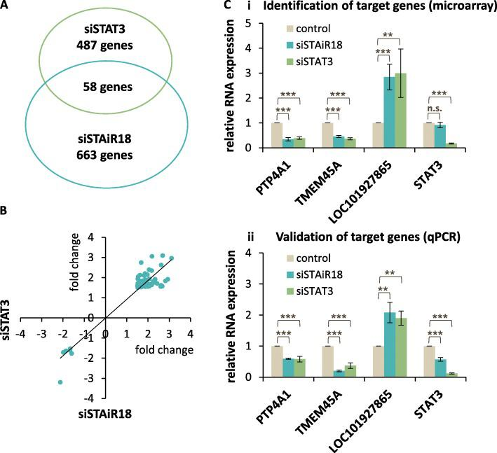 Identification of genes regulated by STAiR18 and STAT3. a Differentially regulated STAT3 and STAiR18 target genes determined after STAiR18-Ex1 and STAT3 KD ( n = 4). RNA was isolated 40 h post-transfection and subjected to gene expression microarrays. A minimal fold-change of 1.5-fold and maximum p -value of 0.05 were applied as cutoff criteria, yielding 545 and 721 differentially regulated candidates upon STAT3 and STAiR18 knockdown, respectively. 58 of these candidates are regulated by both knockdowns. b The fold-changes of 58 genes differentially regulated by both the KD of STAT3 and STAiR18 were plotted against each other. c Validation of selected transcripts regulated by both KDs by qPCR using specific primer pairs. Values were normalized to U6 RNA ( n = 4). The detected expression of equivalent genes identified by microarray is shown at the top panel (i) for comparison