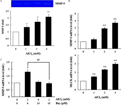 Activity of metalloproteinase-9 (MMP-9), and mRNA expression of MMP-9 and myosin light-chain kinase (MLCK) in  AlCl 3 -treated HT-29 cells. (A) The cells were treated with  AlCl 3  ( 0 – 4  mM ,  24 h ). The MMP-9 activity in cultured medium was measured by gelatin zymography. The image shown is representative of three independent experiments. (B) Gene expression of MMP-9 and MLCK in cells treated with  AlCl 3  ( 0 – 4  mM ,  12 h ) ( n = 3  wells / group ). Glyceraldehyde 3-phosphate dehydrogenase (GAPDH) was used as the housekeeping gene. (C) Gene expression of MMP-9 in cells pretreated with Bay ( 15 μ M ,  1 h ), followed by  AlCl 3  treatment ( 2  mM ,  12 h ) ( n = 3  wells / group ). Glyceraldehyde 3-phosphate dehydrogenase (GAPDH) was used as the housekeeping gene. The values represent the  mean ± SEM  ( n = 3 ); * p