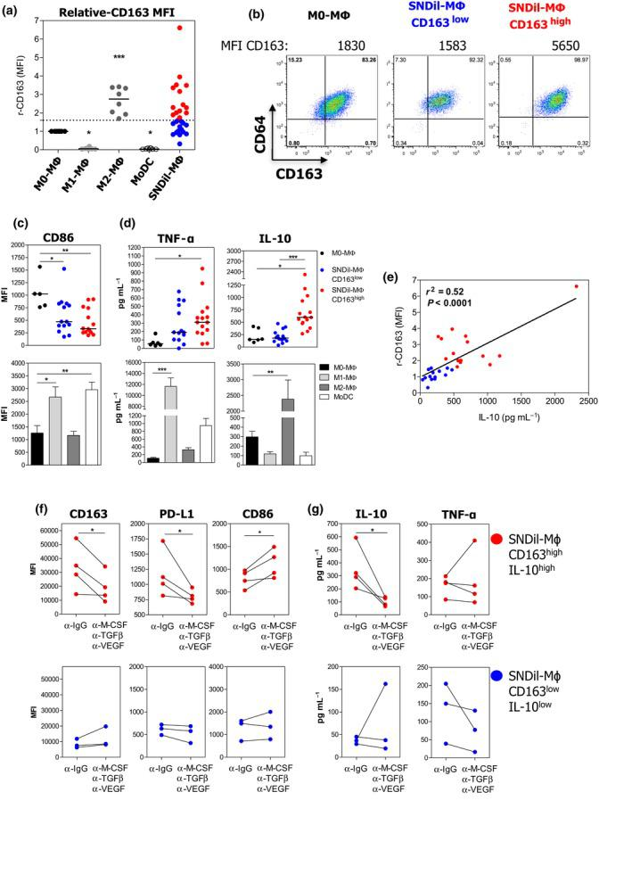 Tumor environmental factors turn monocytes into CD163 high CD86 low IL‐10 high MΦ. HD CD14 + monocytes were cultured in the presence of 25% SNDils for 7 days, and surface markers and cytokine production were evaluated 24 h after addition of LPS. (a) r‐CD163 MFI from control APCs ( n = 8 independent donors) and SNDil‐MΦ ( n = 29 independent SNDils). (b) Representative pseudocolour plots of CD64 + CD163 + cells of <t>M0‐MΦ</t> and SNDil‐MΦ based on the median obtained within each group. (c) Expression of CD86 and (d) production of TNF‐α and IL‐10 in CD163 low and CD163 high SNDil‐MΦ or in control APCs. For (a–d) , experiments performed with, at least, five independent donor monocytes and different SNDils ( n = 29). (e) Correlation of r‐CD163 MFI and IL‐10 production among SNDil‐MΦ. (f, g) SNDil‐MΦ were cultured in the presence of neutralising <t>anti‐M‐CSF,</t> anti‐TGF‐β and anti‐VEGF or control antibodies during the differentiation process and were activated by LPS during the last 24 h to evaluate surface markers (f) and cytokine production (g) in CD163 high IL‐10 high SNDil‐MΦ (red dots, n = 4; * P ≤ 0.05) and CD163 low IL‐10 low SNDil‐MΦ (blue dots; n = 3).