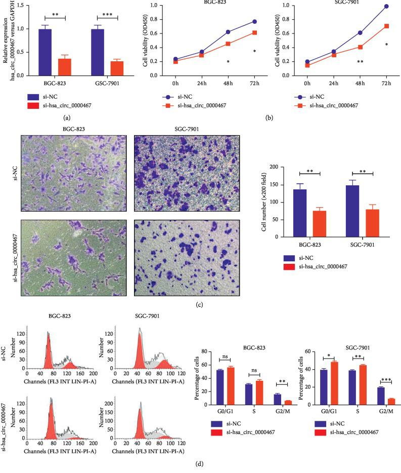 Effect of hsa_circ_0000467 silencing on GC proliferation, invasion ability, and cell cycle. (a) The interference efficacy of siRNA targeting hsa_circ_0000467 was measured by qRT-PCR. (b) The proliferation activity of BGC-823 and SGC-7901 cells transfected with si-NC or si-hsa_circ_0000467 was detected by CCK8 assays. (c) The invasion ability of BGC-823 and SGC-7901 cells transfected with si-NC or si-hsa_circ_0000467 was detected by Transwell assays. (d) The cell cycle of BGC-823 and SGC-7901 cells transfected with si-NC or si-hsa_circ_0000467 was detected by flow cytometry. The results are represented as the means ± SD of at least three times. ns: not significant, ∗ P