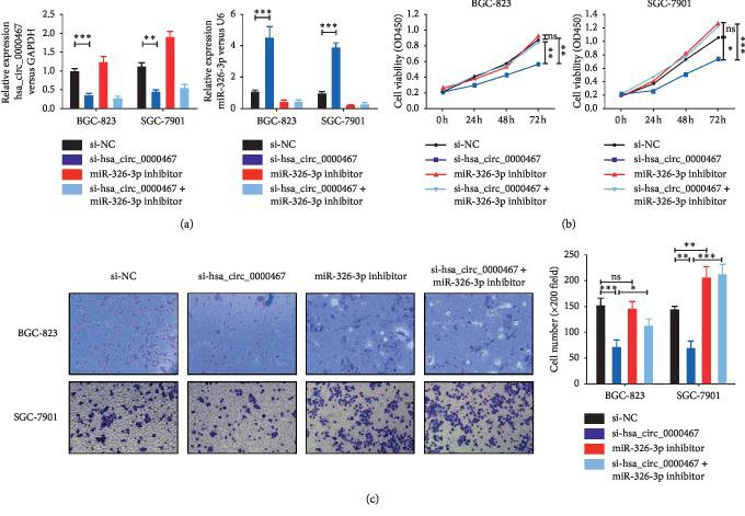 Changes in the proliferation and invasion of BGC-823 and SGC-7901 cells caused by low has_circ_0000647 expression could be reversed by knocking down miR-326-3p. (a) Expression of hsa_circ_0000467 and miR-326-3p in different groups of BGC-823 and SGC-7901 cells was detected by qRT-PCR. (b) The proliferation activities of different groups of these two cell lines were measured by CCK8 assays. (c) The invasion ability of different groups of these two cell lines was detected by Transwell assays. The data are presented as the mean ± SD. ns: not significant, ∗ P
