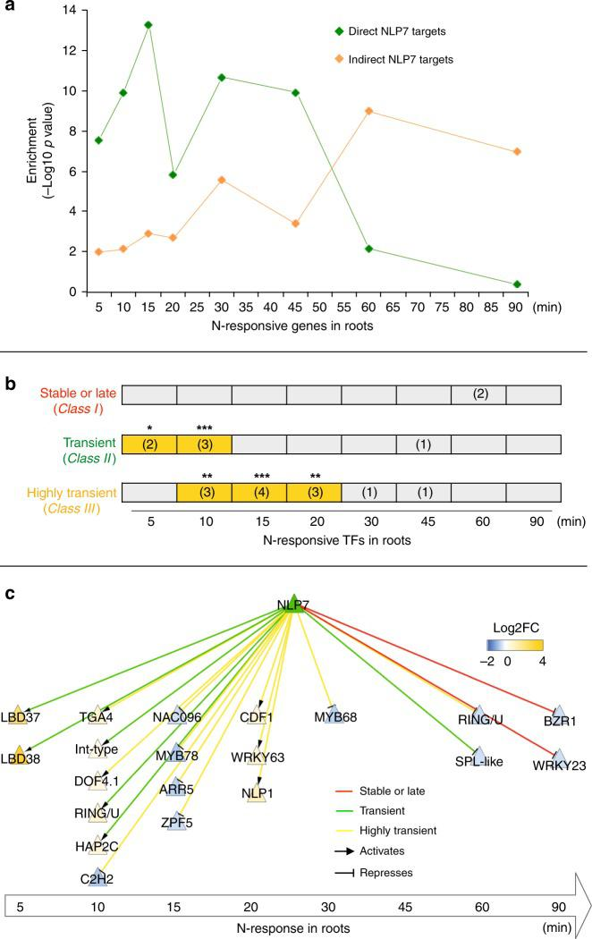 NLP7-direct targets are enriched in early N-responsive genes including secondary TFs. a Intersection of NLP7-direct and indirect targets detected in root cells with a time-series of N-response genes in whole roots 19 . The time points represent the just-in-time analysis 19 which binned genes based on the first time point at which their mRNA levels were affected by N treatment at 5, 10, 15, 20, 30, 45, 60, and 90 min. The significance ( p -value) of the intersection between NLP7 targets with each N-time point was calculated and −log10 ( p -value) was graphed. b Intersection of N-responsive secondary TFs regulated by NLP7 and genes belonging to each class of NLP7 binding. Size of overlap is listed in parentheses, and significance is indicated by yellow highlighting and asterisks (Fisher's exact test, * p -value