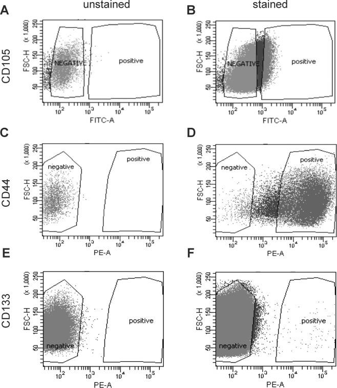 Sorting of CSCs based on FACS analysis by FACS Aria II cell sorter. Dot plots  (A) (C)  and  (E)  showing unstained cells before FACS sorting and dot plots showing stained cells positive for  (B)  CD105−CSCs  (D)  CD44−CSCs and  (F)  CD133-CSCs from Caki-1 cell line. These CSCs were sorted and culture in normoxic condition in FreeStyle™ 293 medium before xenograft experiments. The percentage of sorted cells positive for CD105, CD44, and CD133 makers were approximately 9%, 96% and 1%, respectively.