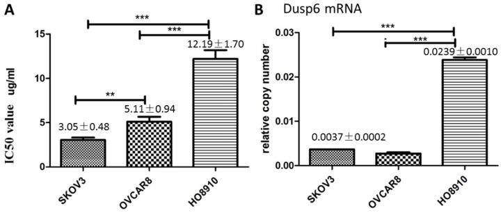 DUSP6 increases cell viability when treated with cisplatin. (a) MTS was used to measure cell viability and determine the IC50 value of cisplatin in SKOV3, OVCAR8 and HO8910 cell lines. (b) Expression level of DUSP6 mRNA. *** and ** indicate statistically significant differences, P