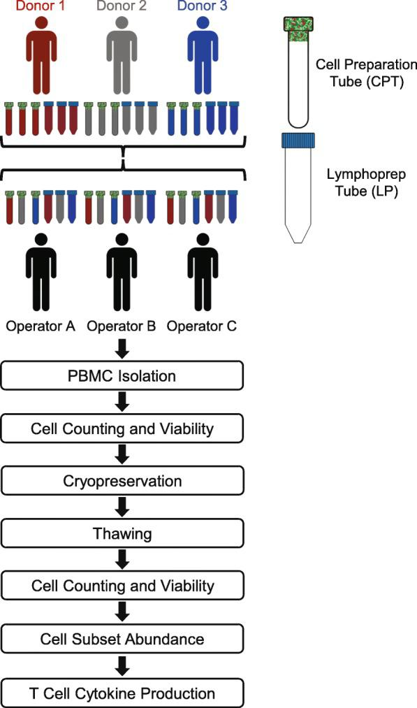 Schematic of the PBMC sample collection and processing. Six aliquots of blood (three for CPT processing and three for LP tube processing) were drawn from three donors. A CPT and LP tube from each donor was processed in parallel by three unique operators. Performance of PBMC isolation methods were measured by their cell yields, viabilities, and recovery both fresh and after cryopreservation and thawing. PBMCs were also stained with surface and intracellular antibodies to assess abundance of cell subsets and functional T cell response following stimulation