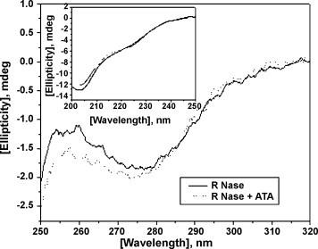 The near-UV and far-UV (inset) CD spectra of 3.52 μM of RNase A (solid line) and 9 μM ATA bound RNase A (dotted line) in RNase assay buffer was measured in Hitachi at 25 °C.
