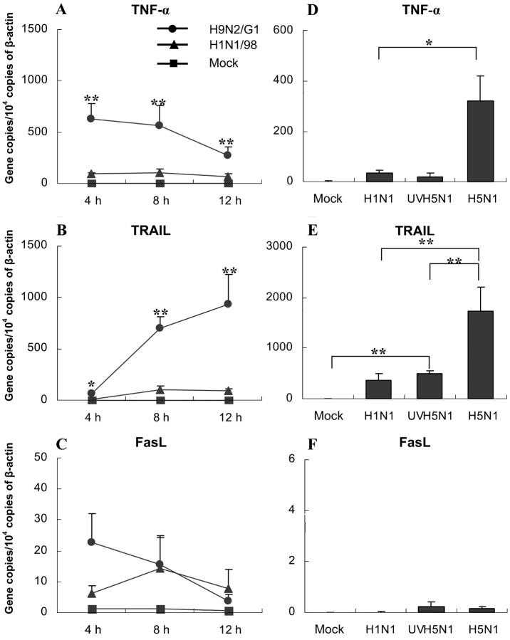 mRNA expression of tumor necrosis factor (TNF)–α, TNF-related apoptosis-inducing ligand (TRAIL), and Fas ligand (FasL) in influenza virus–infected monocyte-derived macrophages (MDMs). A, B and C The kinetics of TNF-α, TRAIL, and FasL mRNA expression in H1N1/98- and H9N2/G1-infected MDMs. Total RNA was harvested at 4, 8, and 12 h after influenza virus infection. The target genes were quantified by quantitative reverse-transcription polymerase chain reaction and normalized to 1×10 4 copies of β-actin mRNA. Data are the mean ± SE from 6 independent experiments. D, E and F TNF-α, TRAIL, and FasL mRNA expression in MDMs treated by H5N1 and UV-irradiated H5N1 (UVH1N1) at 7 h after infection. Data are the mean ± SE from 4 independent experiments. *P