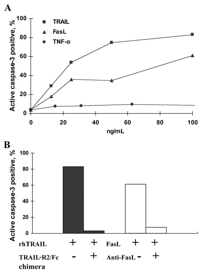 Sensitivity of Jurkat T cells to tumor necrosis factor (TNF)–related apoptosis-inducing ligand (TRAIL)– and Fas ligand (FasL)–induced apoptosis but not to TNF-α. A Jurkat T cells cultured in the presence of recombinant TNF-α, TRAIL, and FasL at concentrations of 0–100 ng/mL for 24 h. Cell death was determined by active caspase–3 staining. B Jurkat T cell death, induced by 100 ng/mL recombinant human (rh) TRAIL and 100 ng/mL FasL and inhibited by specific antibodies at a final concentration of 1 μg/mL. Data are representative of 3 independent experiments. TRAIL-R2, TRAIL receptor 2