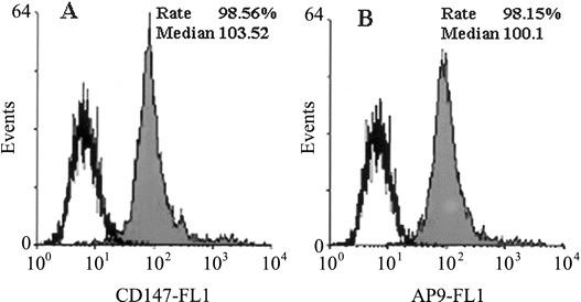 Flow-cytometric analysis of HAb18G/CD147 and antagonistic peptide (AP)–9. A Expression of HAb18G/CD147 on 293 cells, analyzed by use of fluorescein isothiocyanate (FITC)–conjugated anti-CD147 antibody. B Binding of AP-9 to 293 cells, analyzed by use of biotin–AP-9 and avidin-FITC