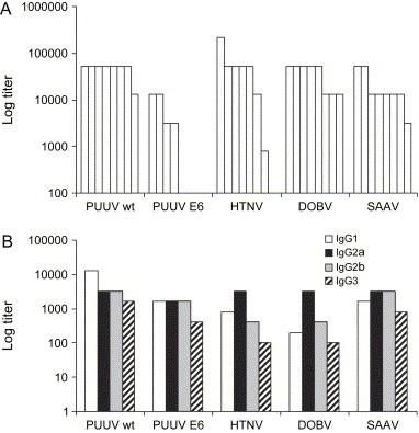 Total IgG and IgG subclass responses against N in sera from adult NMRI mice 60 days after DOBV, HTNV, PUUV Kazan-wt and PUUV Kazan-E6 p6 inoculation and 49 days after SAAV inoculation. (A) IgG anti-N responses. (B) IgG subclass anti-N responses in pooled sera from four mice inoculated intravenously with PUUV Kazan-wt (1000 bank vole ID 50 ), four mice inoculated intravenously with PUUV Kazan-E6 (25,000 FFU), three mice inoculated intravenously with HTNV (90,000 FFU), four mice inoculated intravenously and subcutaneously with DOBV (80,000 FFU), and eight mice inoculated intravenously and subcutaneously with SAAV (100,000 FFU).