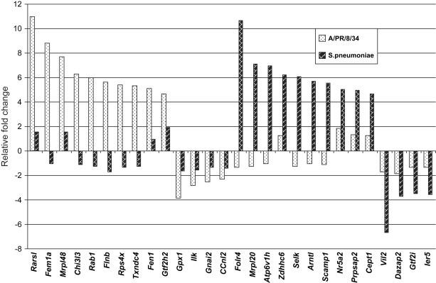 Signature patterns of gene expression in mice in response to influenza virus A/PR/8/34 and Streptococcus pneumonia. Twenty-eight differentially expressed genes were selected to show the difference of gene expression patterns between mice infected with influenza virus A/PR/8/34 and Streptococcus pneumoniae at day 1. The relative fold changes for each gene were used for comparison.