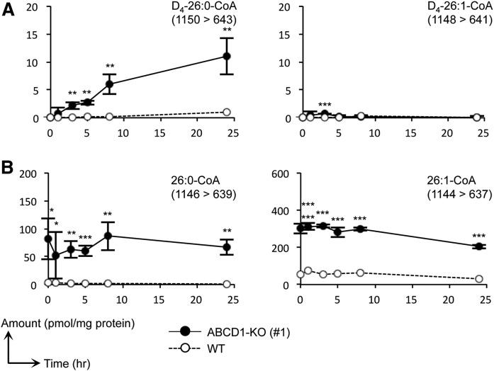 Metabolic analysis of VLCFA-CoA species using FA D 4 -26:0. Metabolic profiles of 26:0- and 26:1-CoA species containing a deuterium-labeled (A) or nonlabeled (B) acyl moiety in ABCD1-KO (#1) and WT HeLa cells (WT). Cells were cultured in medium containing 10% FBS and were treated with 30 μM of FA D 4 -26:0 and the MβCD complex. Cells were harvested at 1, 3, 5, 8, and 24 h after treatment. We confirmed that the retention times of each deuterium-labeled acyl-CoA species were almost identical with those of the corresponding nonlabeled VLCFA-CoA species. The MRM transitions (Q1/Q3) used are indicated in each panel. Data represent the mean ± SD, n = 3. Statistical analyses were performed with the Student's t -test; * P