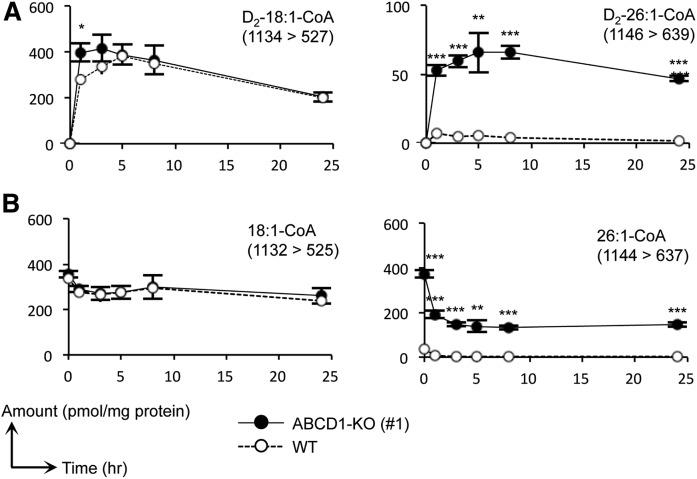 Metabolic analysis of VLCFA-CoA species using FA D 2 -18:1. Metabolic profiles of each deuterium-labeled 18:1- and 26:1-CoA species (A) and nonlabeled 18:1- and 26:1-CoA species (B) were examined in ABCD1-KO (#1) and WT HeLa cells. The metabolic profiles of the other labeled and nonlabeled acyl-CoA species are depicted in supplemental Fig. S3. Cells were cultured in medium containing 10% FBS and treated with 30 μM of FA D 2 -18:1 and the MβCD complex. The cells were harvested at 1, 3, 5, 8, and 24 h after treatment. The MRM transitions (Q1/Q3) used are indicated in each panel. Statistical analyses were performed with the Student's t -test; * P