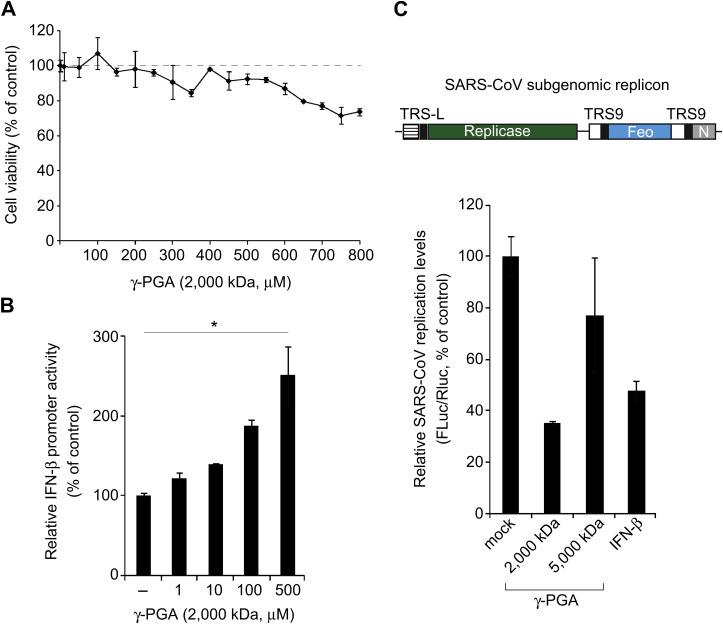 Inhibition by γ-PGA of SARS-CoV replicon replication. (A) The cytotoxicity of γ-PGA (MW: 2000 kDa) in HEK293hTLR4 cells transiently expressing MD2 and CD14 was evaluated by the MTS assay. Cells were treated with increasing concentrations of γ-PGA for 30 h. Data are expressed as the percentage of the untreated control cells. (B) Relative <t>IFN-β-promoter</t> activity was assessed as in Fig. 1 after the cells were treated with increasing concentrations of γ-PGA for 30 h. (C) Schematic diagram of the SARS coronavirus replicon (top panel), which expresses a luciferase reporter gene used for cell-based analysis of the antiviral activity of γ-PGA. The Feo gene (a firefly luciferase gene fused to a neomycin phosphotransferase gene) is expressed from subgenomic mRNA synthesized from transcription-regulating sequence 9 (TRS9), allowing quantitative evaluation of viral genome replication. HEK293hTLR4 cells were transfected with plasmids expressing MD2 and CD14 along with pSARS-REP-Feo producing the SARS-CoV replicon RNA, and <t>pRL-TK.</t> At 12 h post-transfection, cells were treated with 100 μ m γ-PGA with the indicated molecular weight for 30 h and harvested for dual-luciferase assays. Firefly luciferase activity from the replicon plasmid was normalized to Renilla luciferase activity from the pRL-TK plasmid. The normalized luciferase activity of the mock-treated transfected cells was defined as 100. Data from one of two independent experiments with similar results are shown.