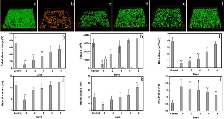 CLSM images (x400 magnification) of the primary biofilm of C1 strain before ( a ) and after AmphB treatment at time 0 ( b ) and the progressive formation of persister-derived biofilms after 2d ( c ), 4d ( d ), 6d ( e ), 8d ( f ) of incubation. In the graphs, substrate coverage ( g ), volume ( h ), bio-volume ( i ), mean thickness (panel j), maximal thickness ( k ), and roughness coefficient ( l ) of the C1 strain persister-derived biofilm are reported, as compared to the corresponding parameters of the primary biofilm (control). In panel h, white bar represents the volume of the dead cells. Significance noted as: *p